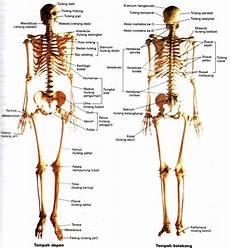 Anira Forever Sistem Muskuloskeletal 002