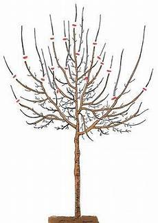 Obstbäume Pflanzen Wann - pflaumenbaum richtig schneiden konoba vrt pflaumenbaum