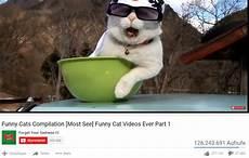 lustige sehr beliebt ᐅ katzenvideos auf sind mehr als ein netter minijob