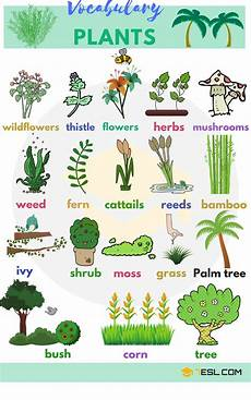 list of plant and flower names in english with pictures 7 e s l