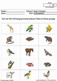 worksheets on animals for grade 1 14265 primaryleap co uk animal groups worksheet science social studies discover more