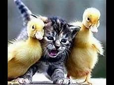 Lustige Bilder - lustige tiere