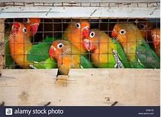 Eulen Malvorlagen Jogja Pet And Bird Market Stockfotos Pet And Bird Market