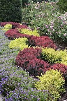 plante couvre sol persistant r 233 aliser un massif avec des couvre sol d 233 tente jardin