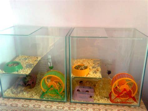 Hamster Por