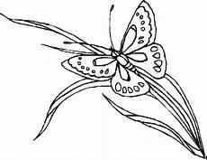 Malvorlage Schmetterling Mit Blume Schmetterling Auf Grashalm Ausmalbild Malvorlage Blumen