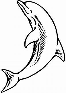 Malvorlagen Delfine Zum Drucken Delfin Ausmalbild Aausmalbilder Club
