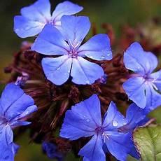 fiori di bach torino corso fiori di bach a torino il 21 e 22 aprile fiori
