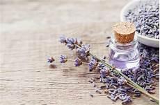 Lavendel Gegen Fliegen Dauerhaft Vertreiben Und Schonend