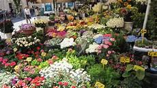 fiori di tutto il mondo sapori da tutto il mondo il mercato di co de fiori