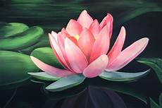 lotus flower art flower hd wallpapers images pictures