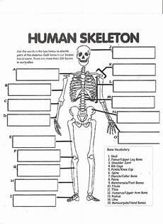 science worksheets human skeleton 12216 digestive system labeling worksheet answers human skeleton worksheet human worksheets