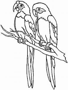 Ausmalbilder Erwachsene Papagei Kostenlose Druckbare Papagei Malvorlagen F 252 R Kinder