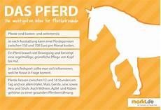 ratgeber zum pferdekauf markt de