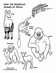 rainforest animals coloring page