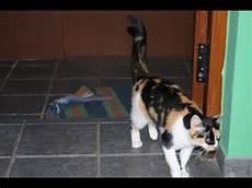 katze durchfall und erbrechen was tun wenn die katze durchfall hat