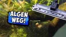 aquarium scheiben reinigen in sekunden aqua update
