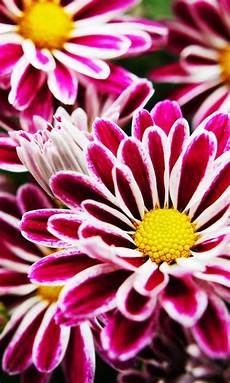 flower wallpaper for phone screen 129604322625a0 46410
