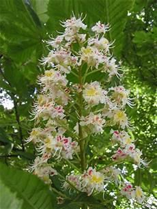 fiori d bach i fiori di bach immagini dei 38 fiori di bach