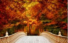 Gold High Quality Fall Backgrounds