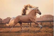 zeig mir pferde bilder kostenlos herunterladen bilder