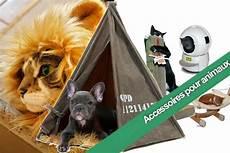 accessoires pour animaux insolites notre top s 233 lection