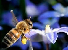 Den Imkern Sterben Im Winter Die Bienen Weg Deutschland