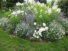 fleur vivace plein soleil plantes fleurs vivaces plein soleil du japon et des fleurs