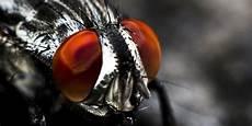 chasser les mouches chasser les mouches de chez soi habitat travaux mobilit 233