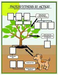 photosynthesis experiments worksheets 12671 pdf day and photosynthesis printable worksheet lekser naturfag