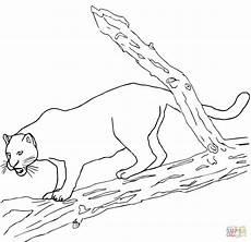 ausmalbild schwarzer jaguar ausmalbilder kostenlos zum