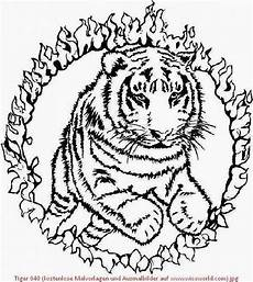 Malvorlagen Zum Ausdrucken Tiger Tiger 040 Kostenlose Malvorlagen Und Ausmalbilder Auf Www