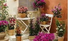 fiori a casa piante perenni per la casa al mare ecco le pi 249 facili da