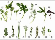 Herb Used In Pho And Salsa,Vietnamese Herbs: A Guide to Eating Fresh Herbs in Vietnam|2020-06-24