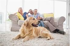 Wohnen Mit Hund Welcher Bodenbelag Ist Der Beste