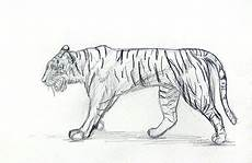 Learn To Draw Tiger Drawing And Painting