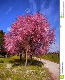 Arbre En Fleur Photo Stock Image 8796750