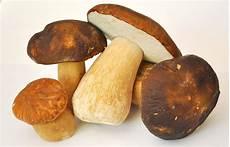 wie lange pilze waldpilze essbare pilze und pilze
