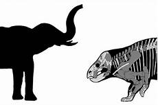 Gambar Ilustrasi Gajah Semburat Warna