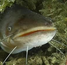 Malvorlagen Fische Rekorde Malvorlagen Fische Rekorde Kinder Zeichnen Und Ausmalen