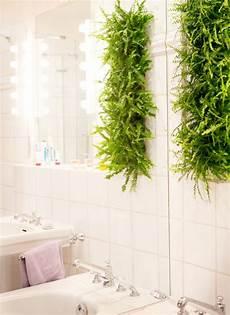 schlafzimmer pflanzen gesund zimmerpflanzen nachhaltig gut f 252 r raumklima gesund und