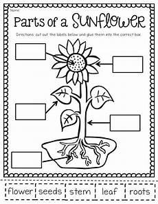 science plants worksheets for kindergarten 13582 the may packet and freebies with images grade science second grade science plant