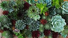 mur végétal stabilisé fabriquer cadre vegetal mural envie de fabriquer un mur