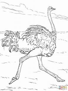 desert animals coloring pages printable 16950 desert drawing at getdrawings free