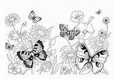 Malvorlage Schmetterling Mit Blume Ausmalbilder Zum Drucken Malvorlage Schmetterling Kostenlos 5