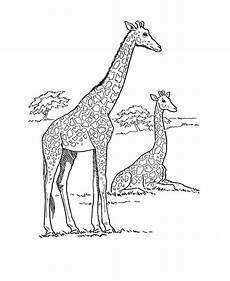 Ausmalbilder Tiere Afrika Giraffe Coloring Pages Animal Pictures