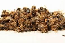 sterben bienen im winter wie hoch waren ihre winterverluste meldungen