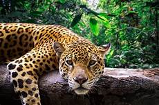 peru s massive new national park will protect two million