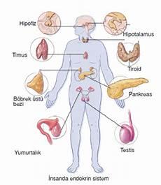 Nsanda Endokrin Sistem