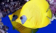 100 Gambar Ikan Segala Jenis Kartun Hias Air Laut
